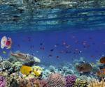 11 unesco grande barriere corail australienne danger - La Diplomatie