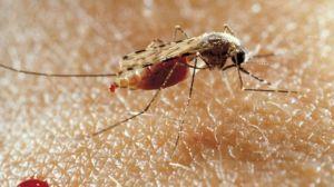 08 oms chine eradique paludisme - La Diplomatie